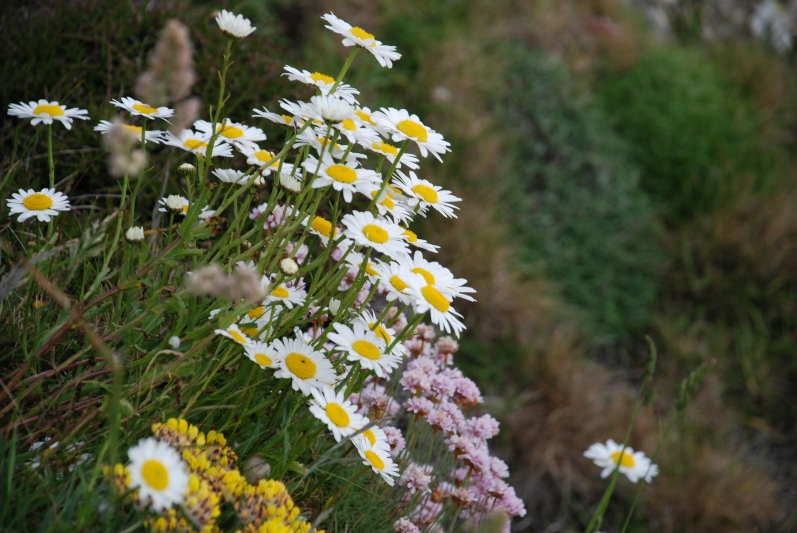 8_fiori in inghilterra