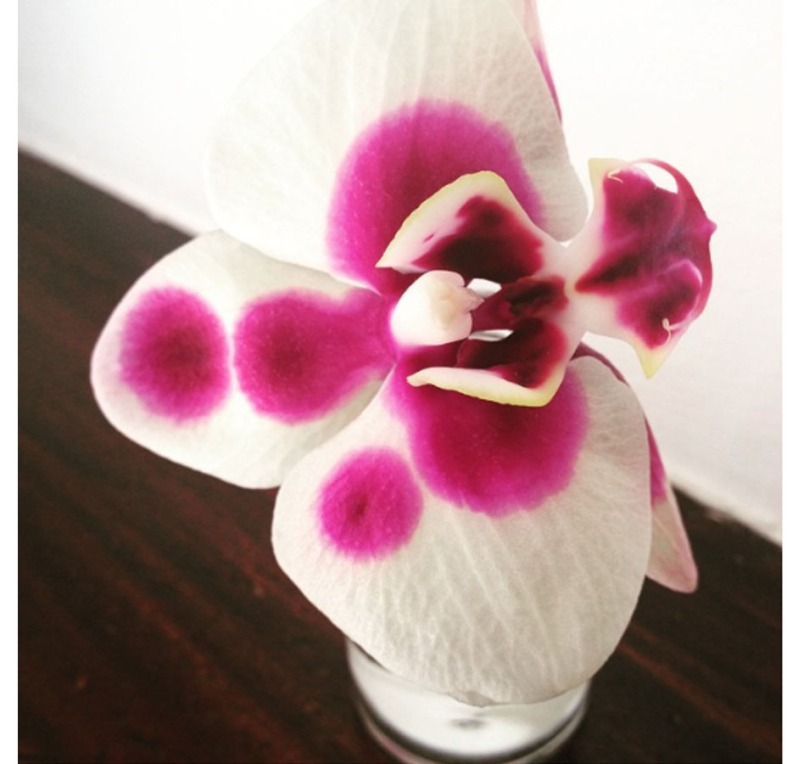 9_fiore mami