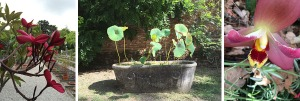 4 Orto Botanico