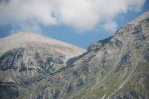 lama bianca