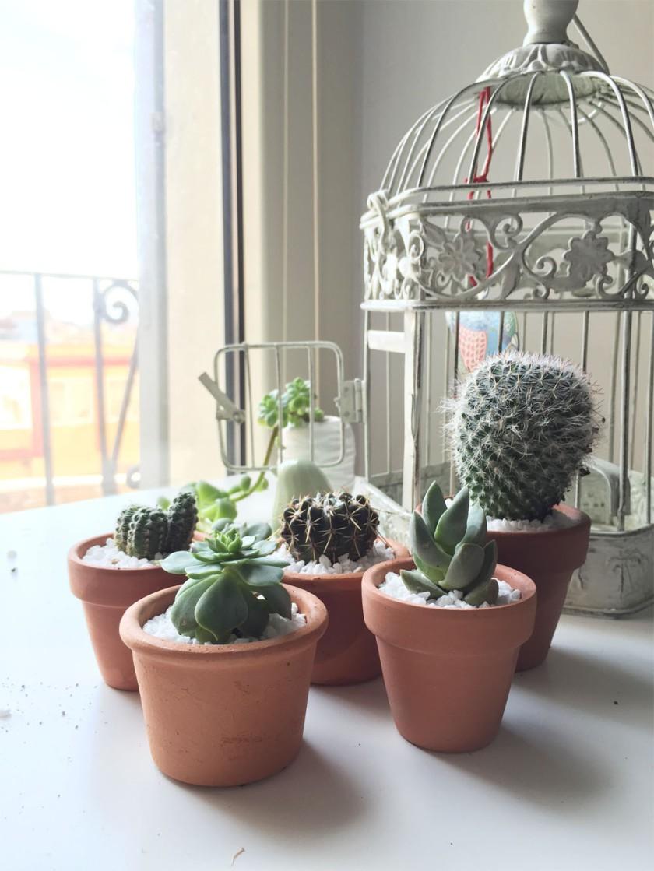 GH_home is where cactus1