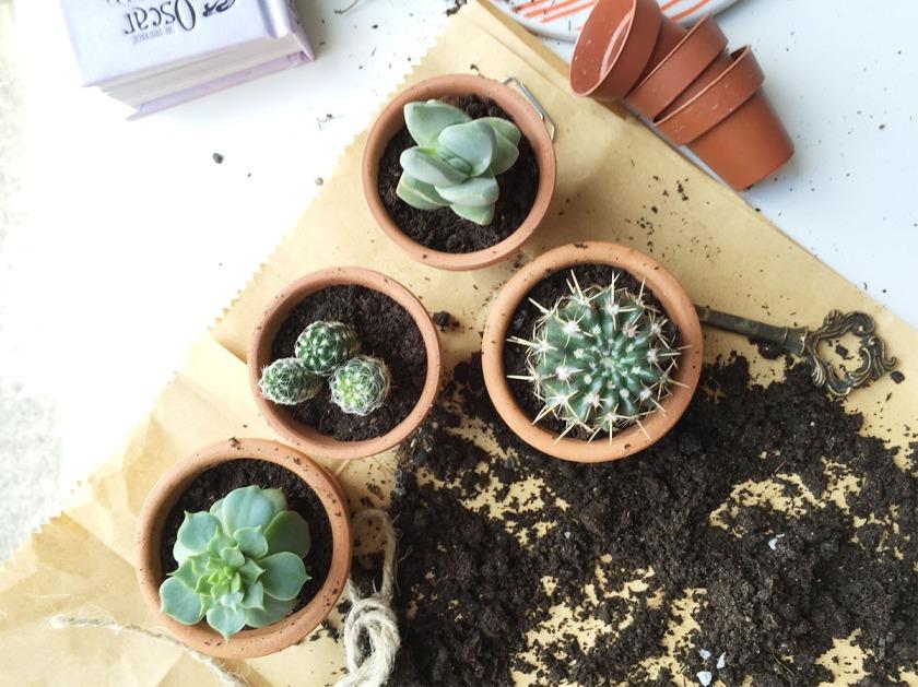 GH_home is where cactus4