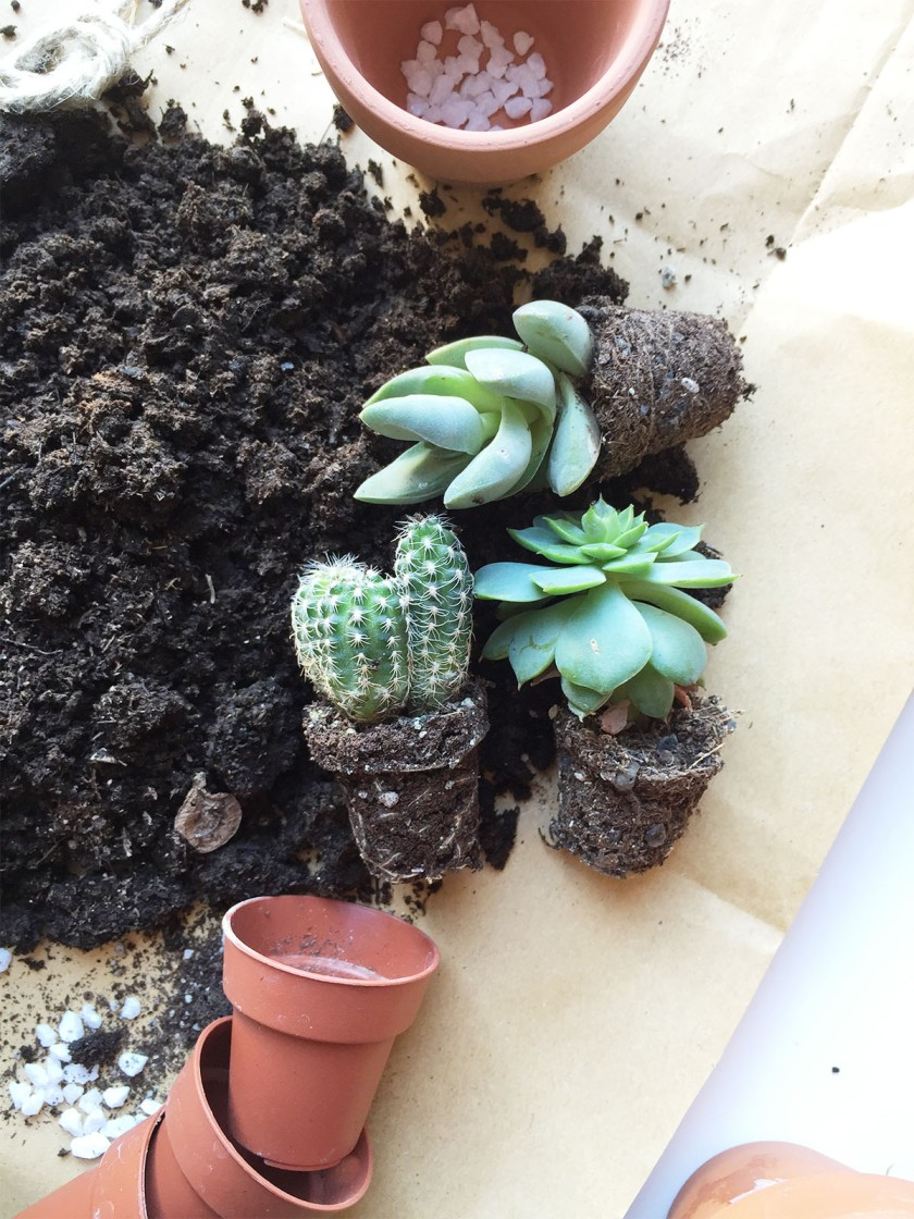 GH_home is where cactus6